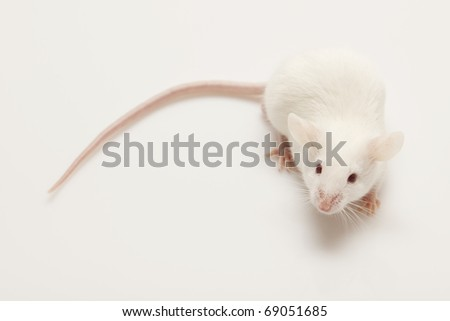 Grey child cute mouse on white background - stock photo