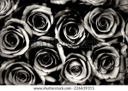 grey condolences flower background - stock photo