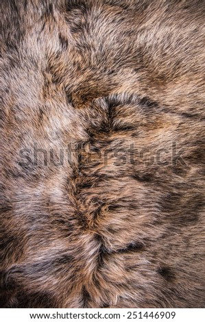 Grey, Dark Brown Fur Natural, Wolf Fox, Animal Mountain Wildlife / Concept and Style for Background, textures and wallpaper, close up full frame. - stock photo