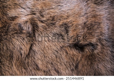 Grey, Dark Brown Wolf Fox Fur Natural, Animal Mountain Wildlife / Concept and Style for Background, textures and wallpaper, close up full frame. - stock photo
