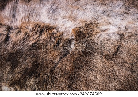 Grey, Dark Brown Wolf Fox Fur Natural, Animal Wildlife Concept and Style for Background, textures and wallpaper. / Close up Full Frame. - stock photo
