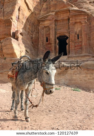grey donkey near ancient  ruins, Petra, Jordan - stock photo
