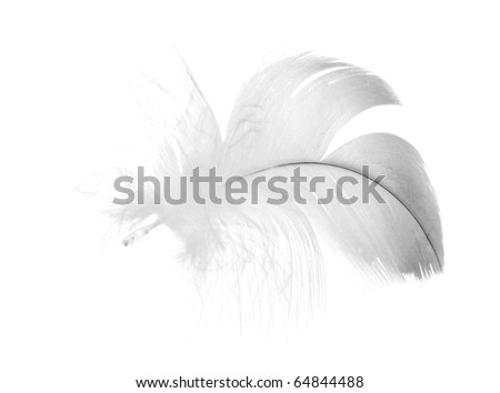 grey feather isolated on white background - stock photo