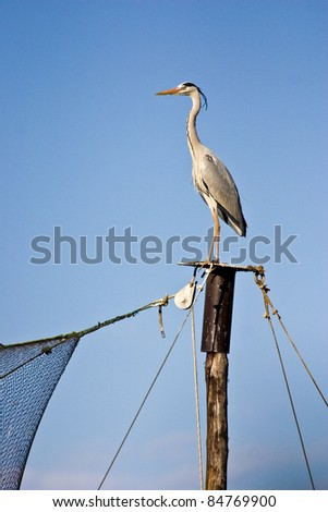 Grey Heron (Ardea cinerea) on a pole. - stock photo