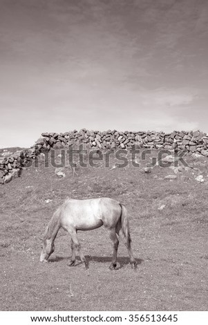 Grey Horse in Field on Inishmore, Aran Islands, Ireland in Black and White Sepia Tone