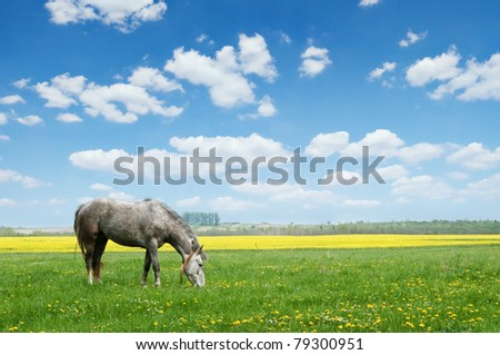 grey horse on flower meadow - stock photo