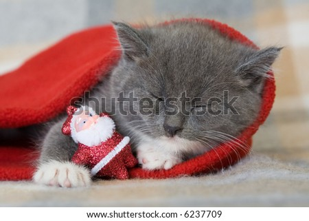 grey kitten and little santa claus