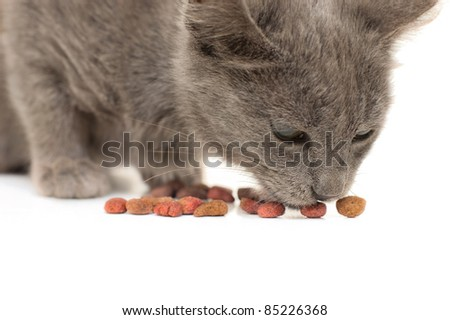 Grey kitten eating dry cat food - stock photo