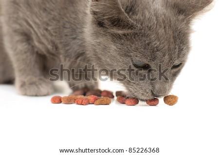 Grey kitten eating dry cat food - stock photo