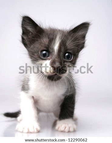 Grey kitten on white background - stock photo