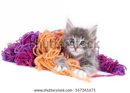 Grey kitten playing with wool, isolated on white - stock photo