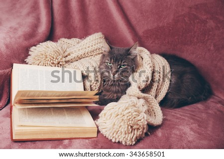 Grey lazy cat with knitted scarf and book on sofa in the room, close up - stock photo
