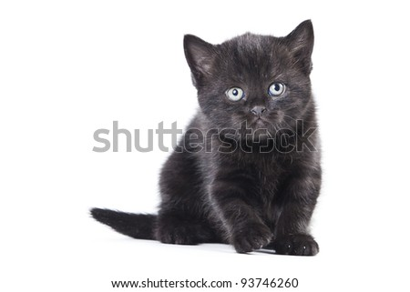 Grey Little Kitten on white background
