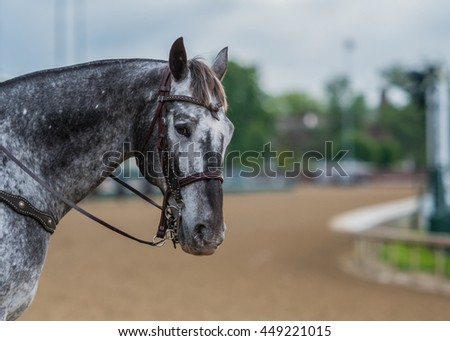 Grey Pinto Horse and Track with copy space - stock photo