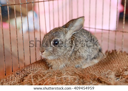 Grey rabbit in the cage - stock photo