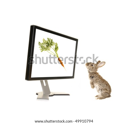 grey rabbit on a  monitor background