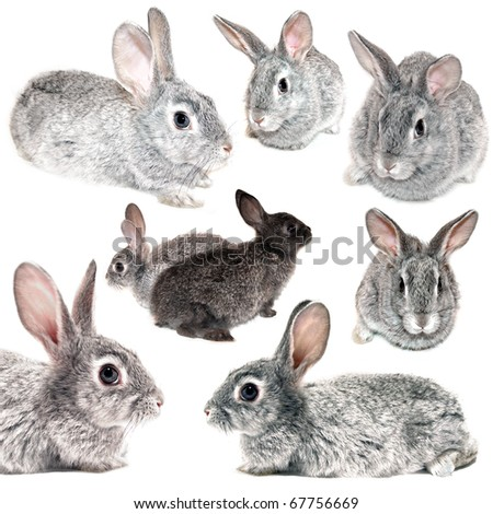 Grey rabbit on a white background - stock photo