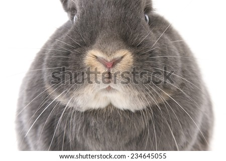 Grey rabbit's nose, cheeks and eyes (closeup), isolated on white  - stock photo