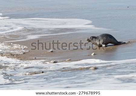Grey Seal Pup - stock photo