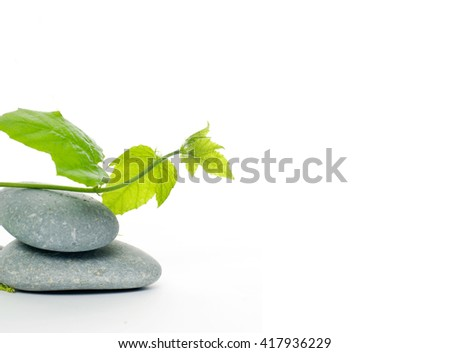 Grey spa stones and green ivy  - stock photo
