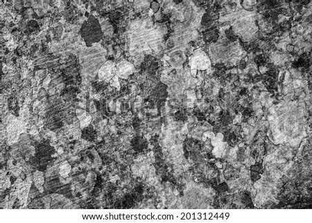 Grey stony surface is overgrown with motley moss. Restrained col - stock photo