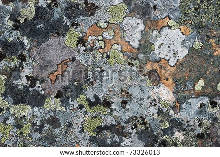 Grey stony surface is overgrown with motley moss. Restrained colors of arctic Norwegian nature. - stock photo
