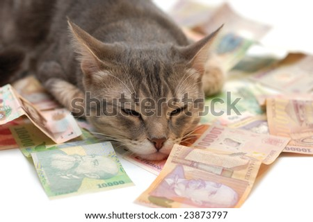 Grey striped cat sleeping on money banknotes - stock photo