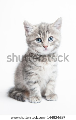Grey striped kitten on a white background - stock photo