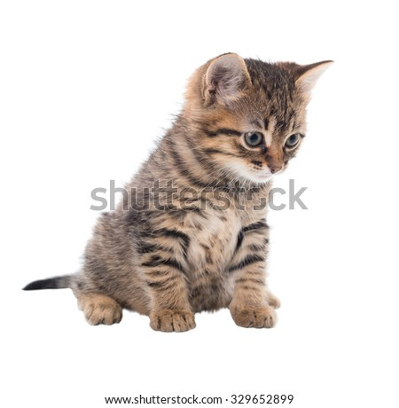 Grey striped kitten with an attentive eye. isolated - stock photo