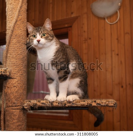 Grey tabby cat and kittens sitting on scratching post - stock photo