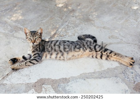 Grey tabby cat sleeping and stretching at the street - stock photo