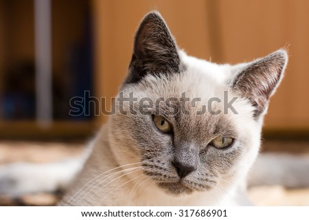 grey white cat - stock photo