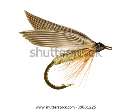 Grey Winged Olive Wet Trout Fishing Fly Isolated on White Background - stock photo