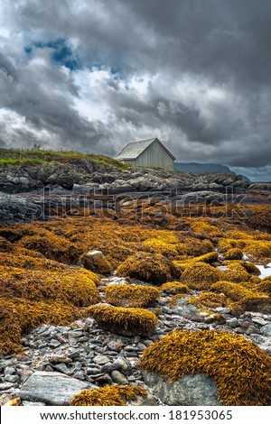 Grey wooden barn on rocky beach covered with orange seaweed set against a powerful overcast sky, Grotlesanden beach, Bremanger, Norway. - stock photo