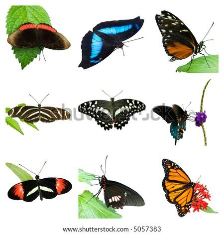 Grid of 9 butterflies - stock photo