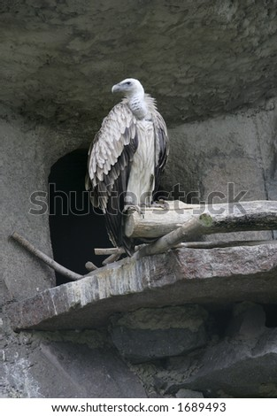 Griffin and its house - stock photo
