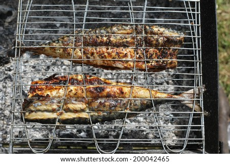 Grilled mackerels on the grill on campfire outdoors