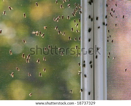 Grimy houseflies congregating on a screen - stock photo