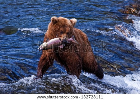 Grizly Bears at Katmai National Park, Alaska, USA - stock photo