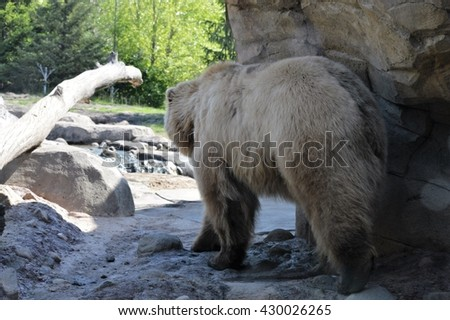 Grizzly Bear - stock photo