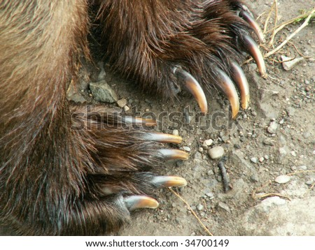 Grizzly bear claw marks
