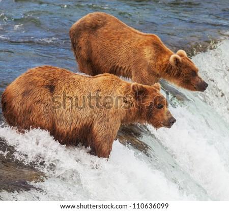 Grizzly bear on Alaska - stock photo