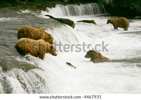 Grizzly bears fishing for salmon, Brooks Falls, Katmai NP, Alaska - stock photo