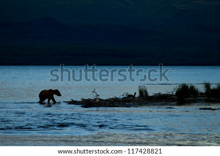 Grizzly - Katmai National Park - Alaska - stock photo