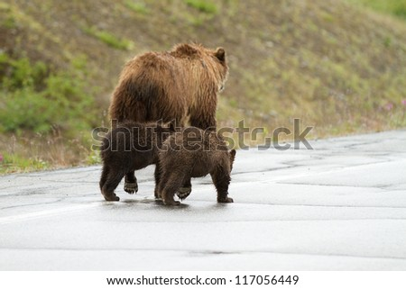 Grizzly sow with cubs - stock photo