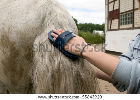 Groom  cleans a  tail of horse with a brush.