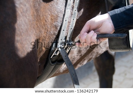 Groom saddling a horse and tighten the girth. - stock photo