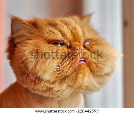 grooming cat - stock photo