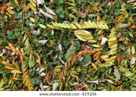 Ground Cover - stock photo