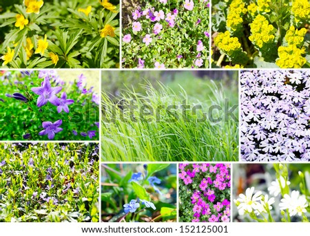 Ground cover assortment